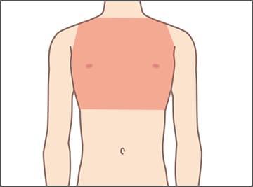 胸(乳首含)